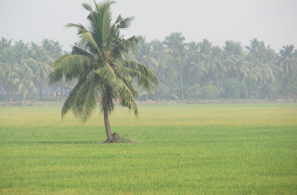 В Индии ужесточается борьба за качество агрохимикатов