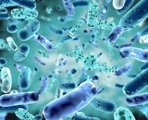 Ученые изучили микробиом азиатских овощей