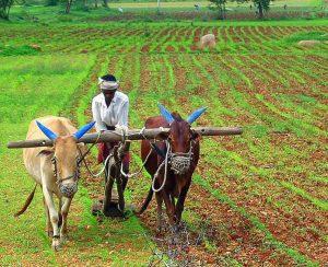 В Индии пытаются стабилизировать цены