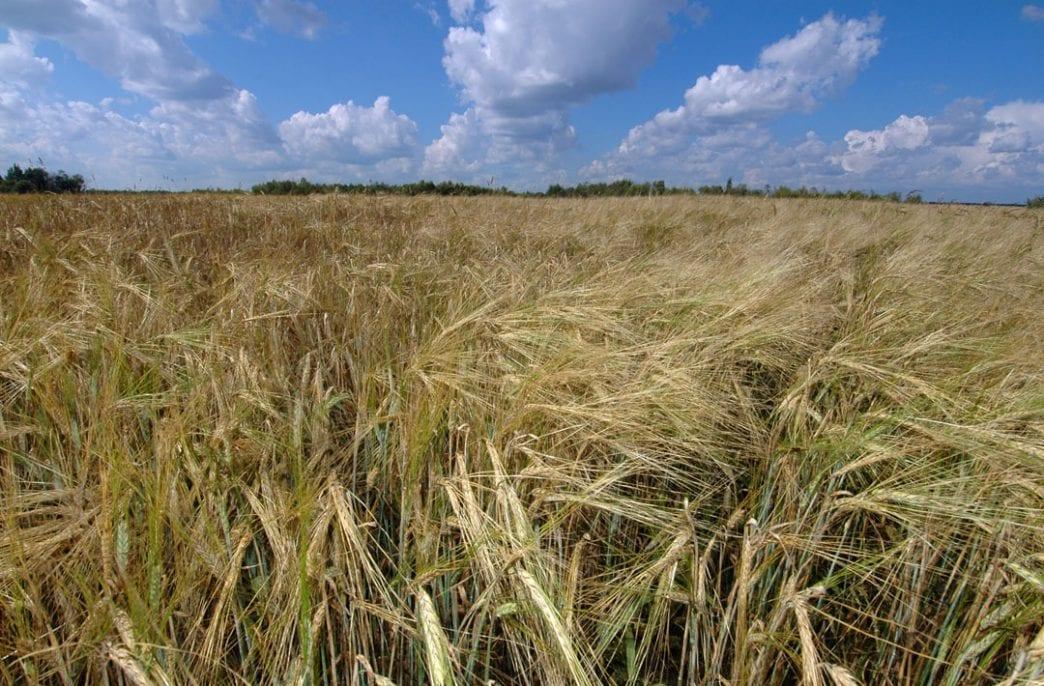 «Сибагро» расширяет земельный банк