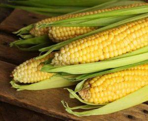 Выращивание кукурузы: пошаговые инструкции