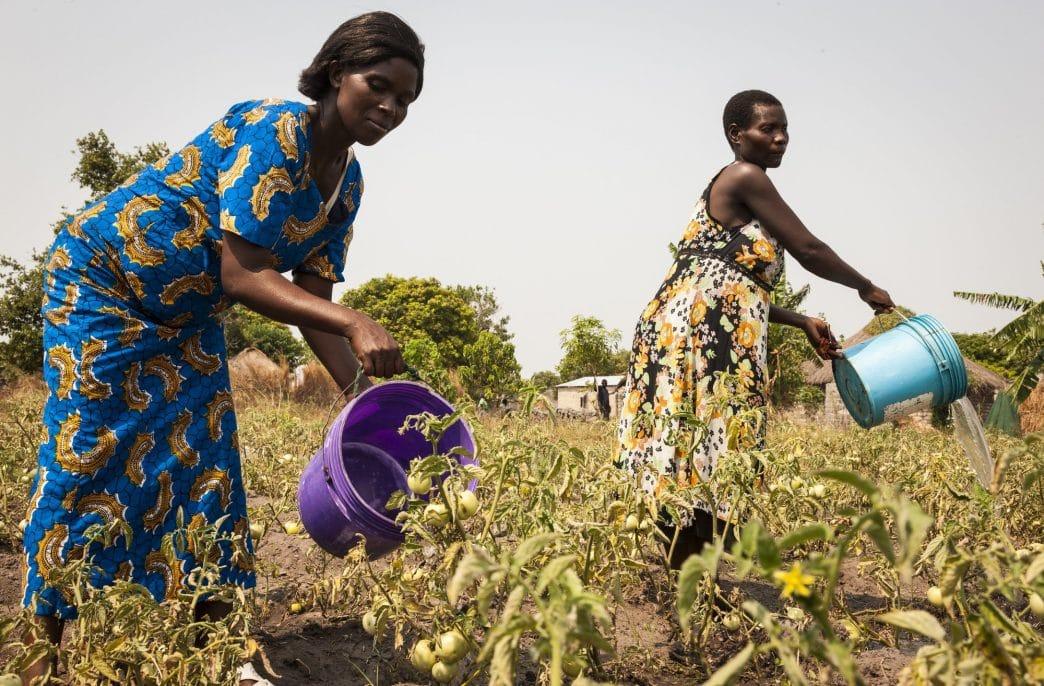 В Замбии провели интересные опыты с фосфоритами