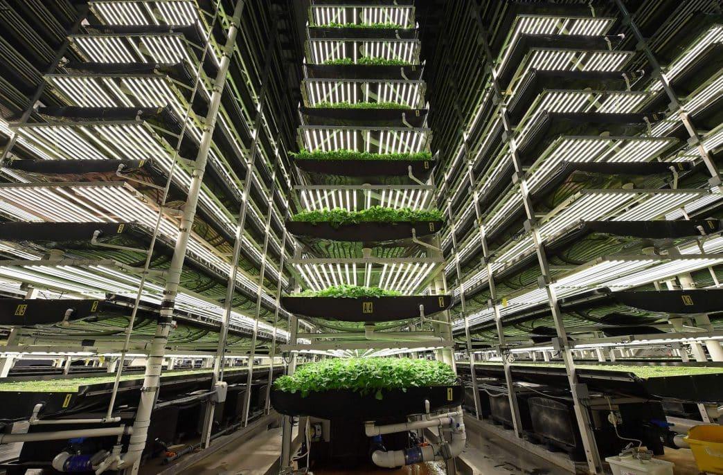 В США создадут крупнейшую аэропонную ферму в мире