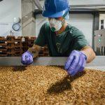 Во Франции построят ферму для насекомых