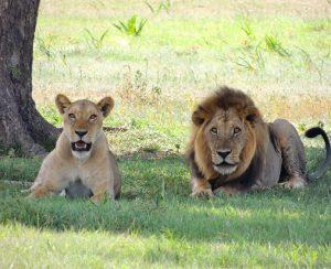 «ФосАгро» удвоит продажи в Африку