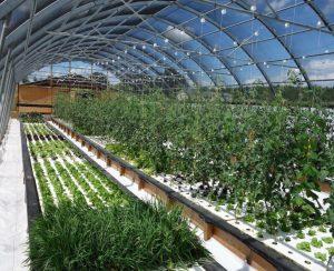 Во Франции построят крупную аквапонную ферму