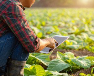 Южная Корея развивает умное земледелие