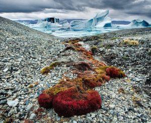 Ученые придумали, как вернуть плодородие почвам Арктики