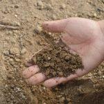 Торф и навоз перестанут быть агрохимикатами