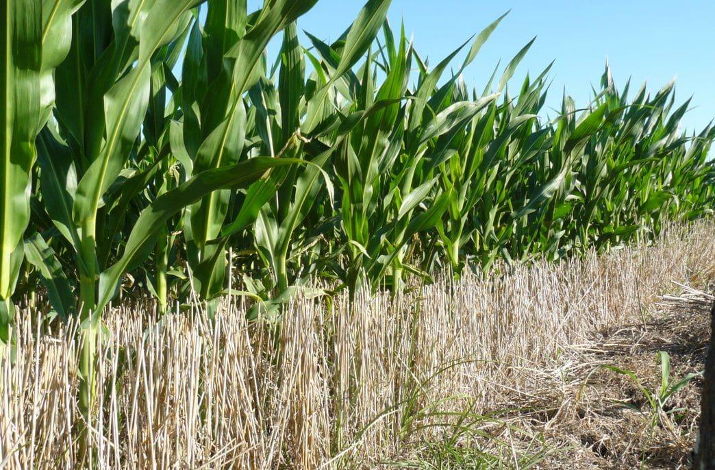 Nutrien ожидает расширения посевных площадей
