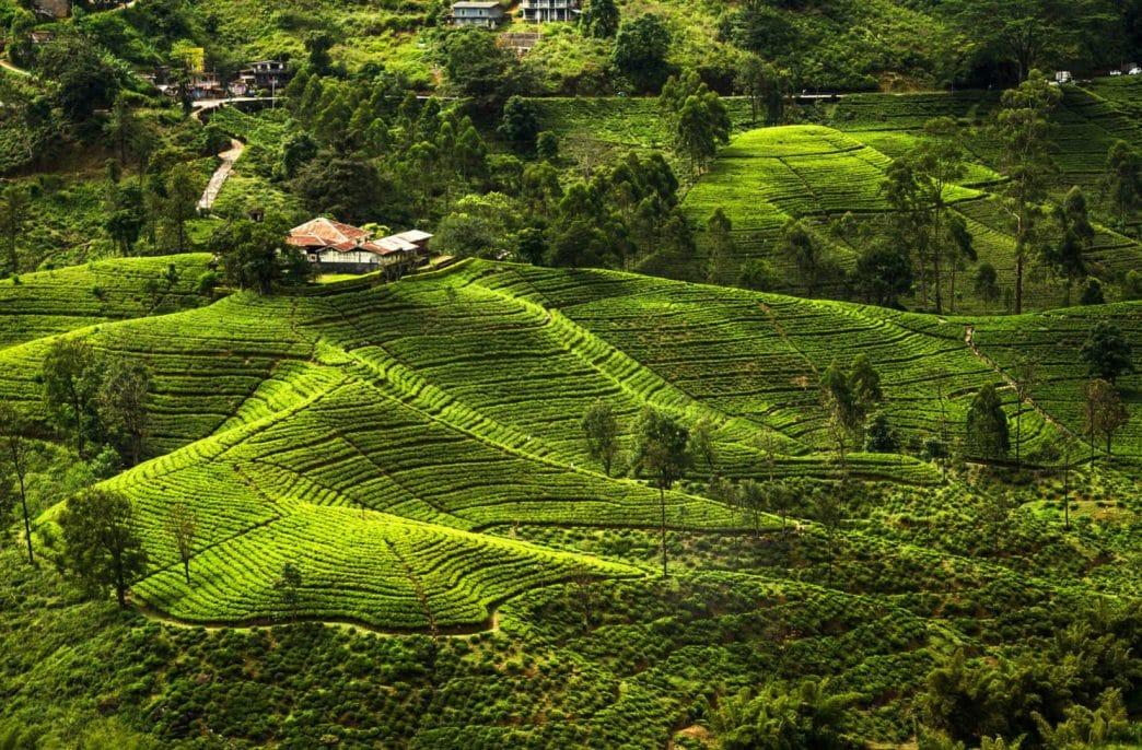 На Шри-Ланке хотят импортировать карбоновые удобрения