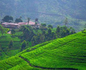 На Шри-Ланке может разразиться агрохимическая катастрофа