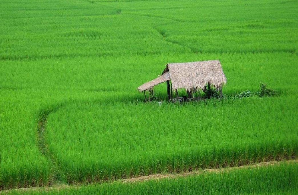 Фермерам Шри-Ланки предложили комбинировать удобрения