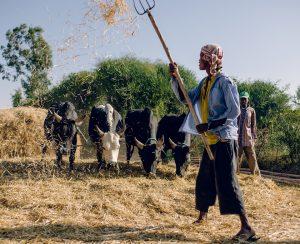 Будущее за углеродным земледелием?