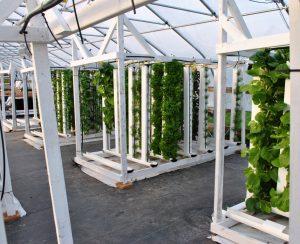 В США построят две вертикальные фермы