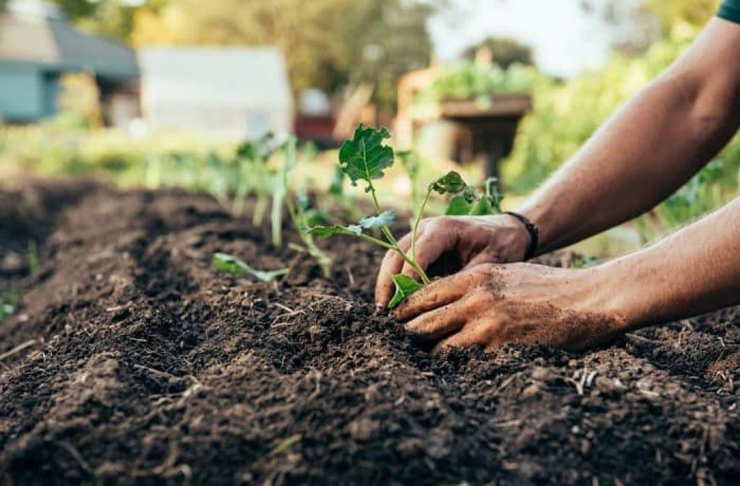 Правила применения ЭМ-технологии в саду и огороде