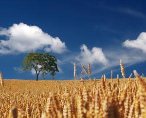 Потребление удобрений в России может вырасти до 8 млн. тонн