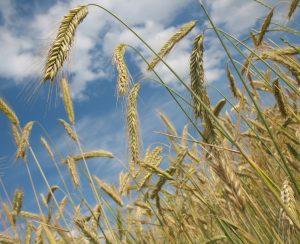 В Татарстане соберутся аграрии со всей России
