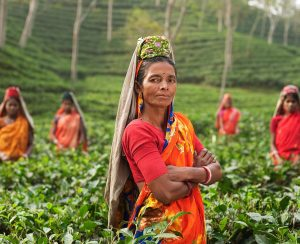 Шри-Ланка может потерять часть рынка чая