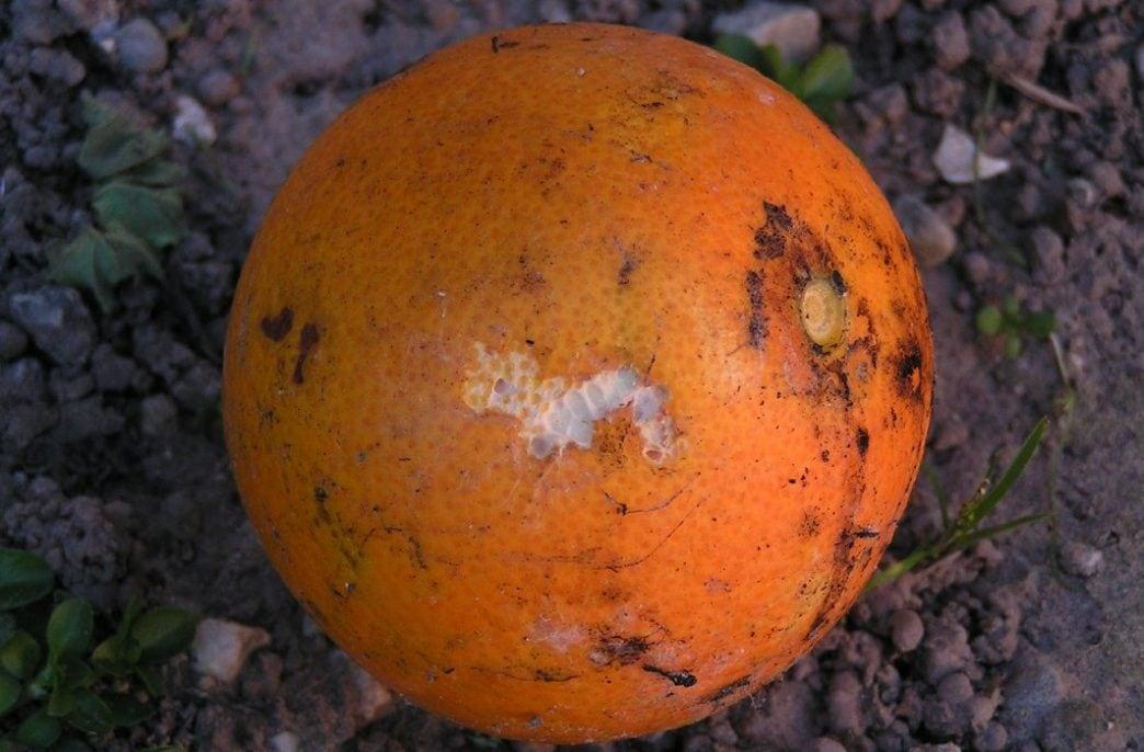Ученые по-новому взглянули на процесс гниения в почве