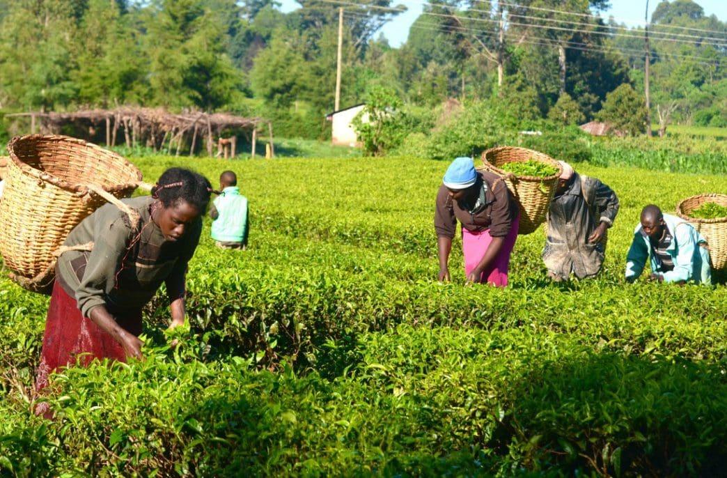 В Нигерии продолжается борьба с фальсификацией агрохимикатов