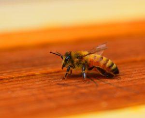 Ученые разработали антидот от пестицидов