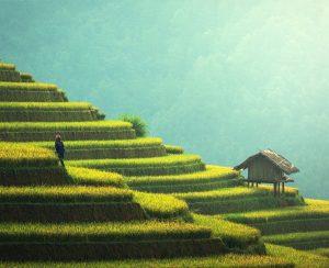 Huy Yun Agriculture почувствовала укрепление спроса