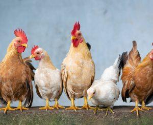 В Чувашии будут выпускать органические удобрения