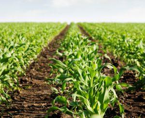 Nufarm Americas вывела на рынок новый гербицид