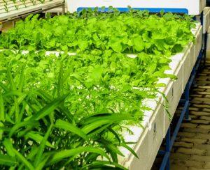 Швеция получит вертикальные фермы