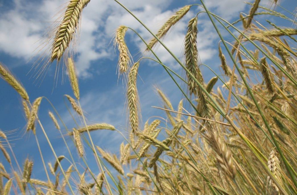Из России снизились поставки зерна