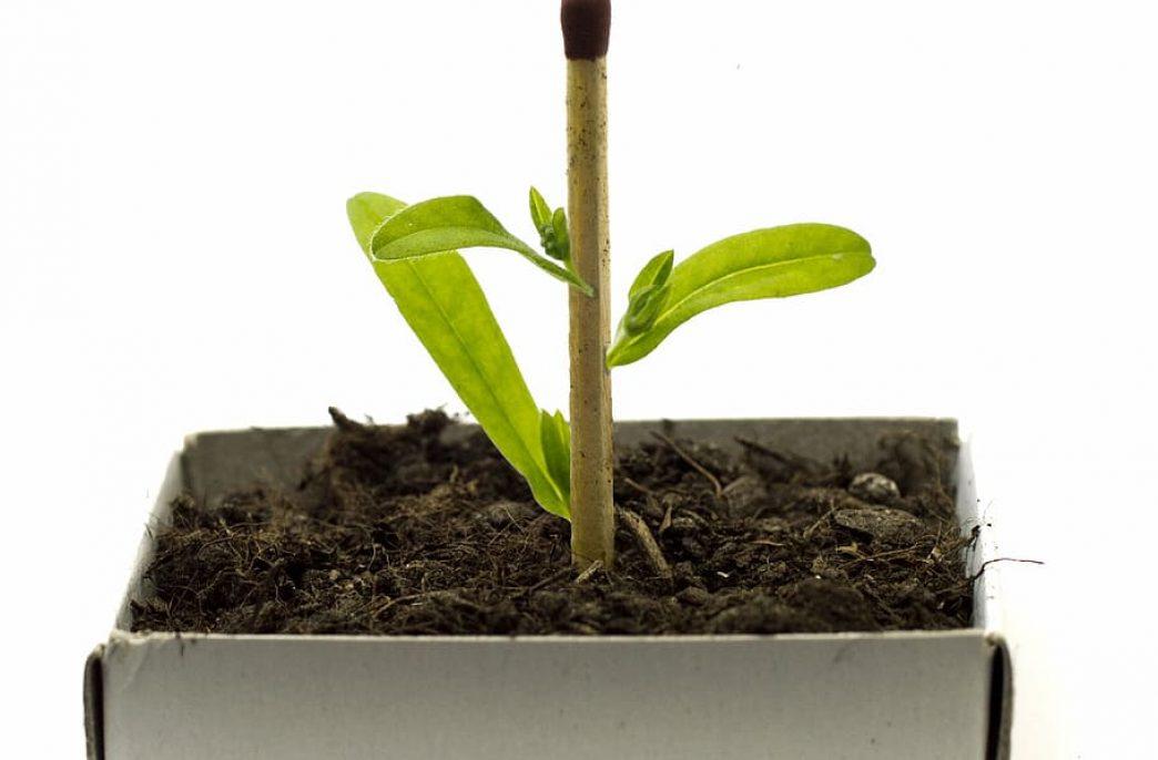Ученые упростили селекцию устойчивых сортов