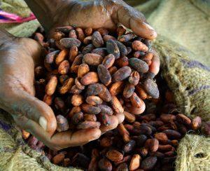 Cargill и AeroFarms улучшат бобы какао