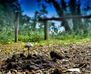 Ученые выявили интересные преимущества биоугля