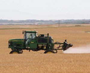 Десикация зерновых: когда и чем проводить
