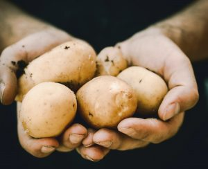 Картофельная отрасль нуждается в цифровых инструментах