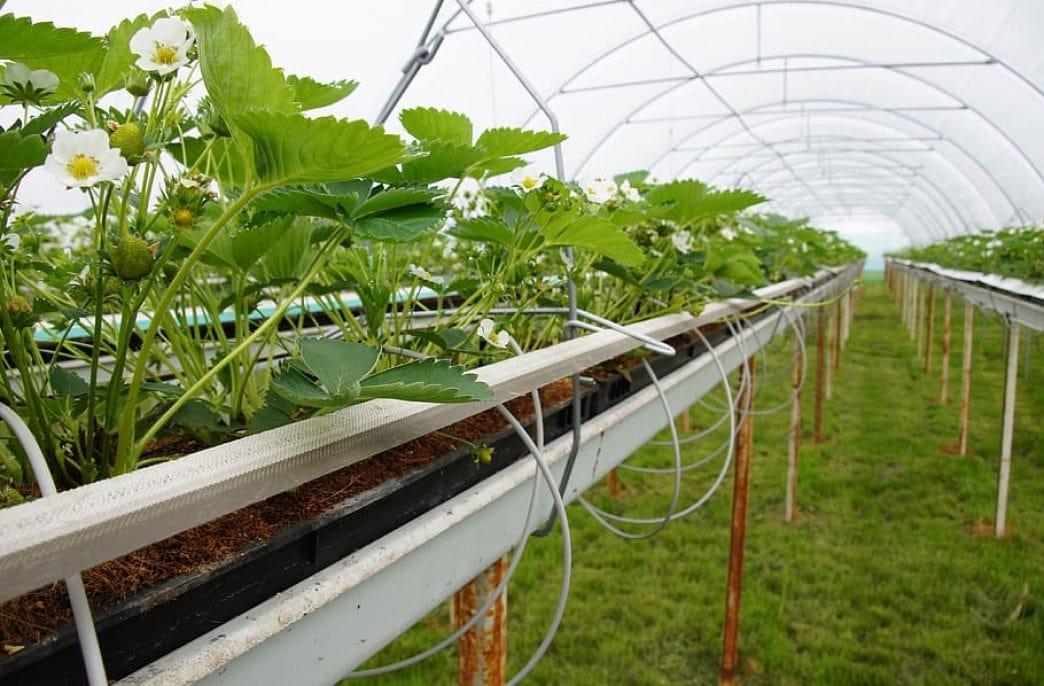 В Великобритании построят вертикальную ферму