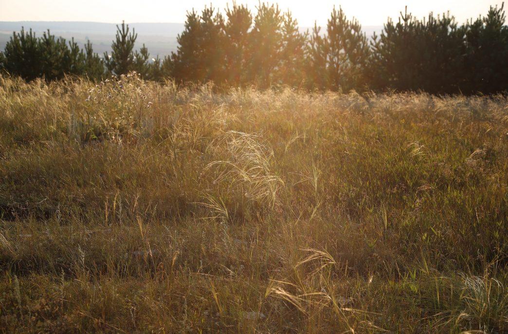 «Август-Агро» вернет в оборот 16 тыс. га заброшенных земель в Татарстане