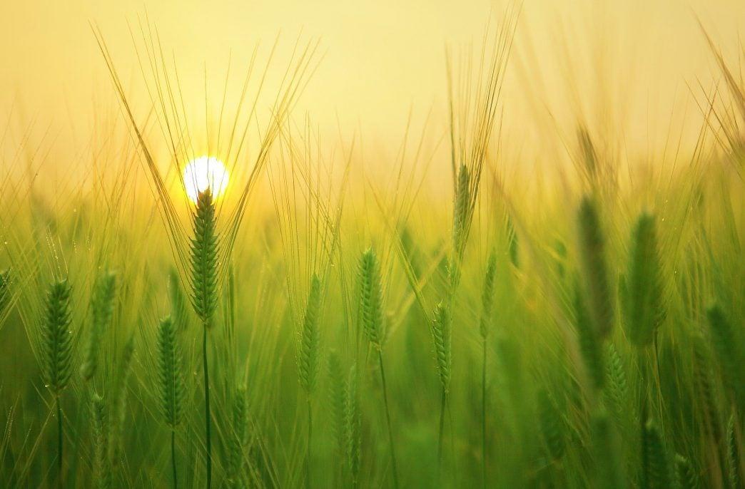 В Москве обсудили тенденции сельского хозяйства России
