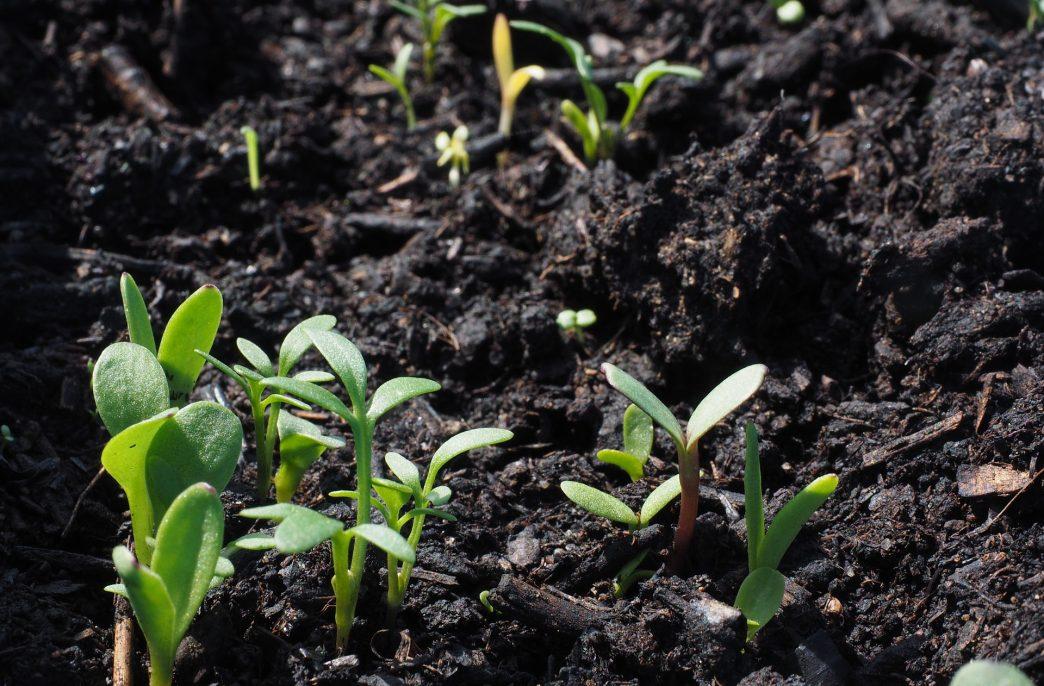 ООН поможет связыванию углерода в почвах