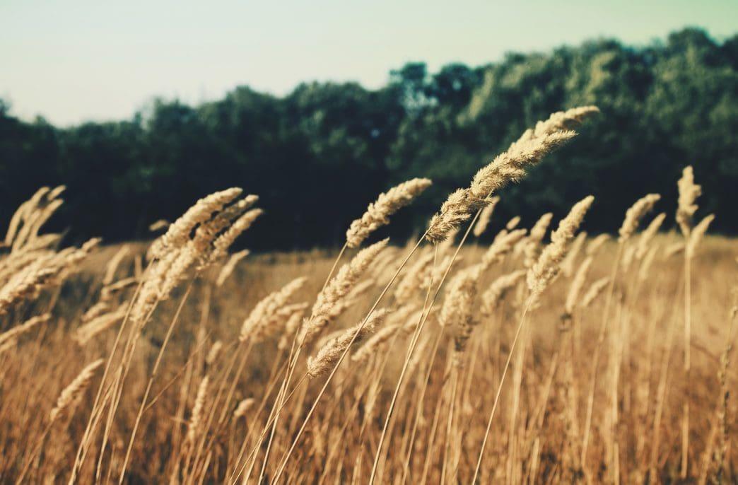 В России резко повысились цены на пшеницу