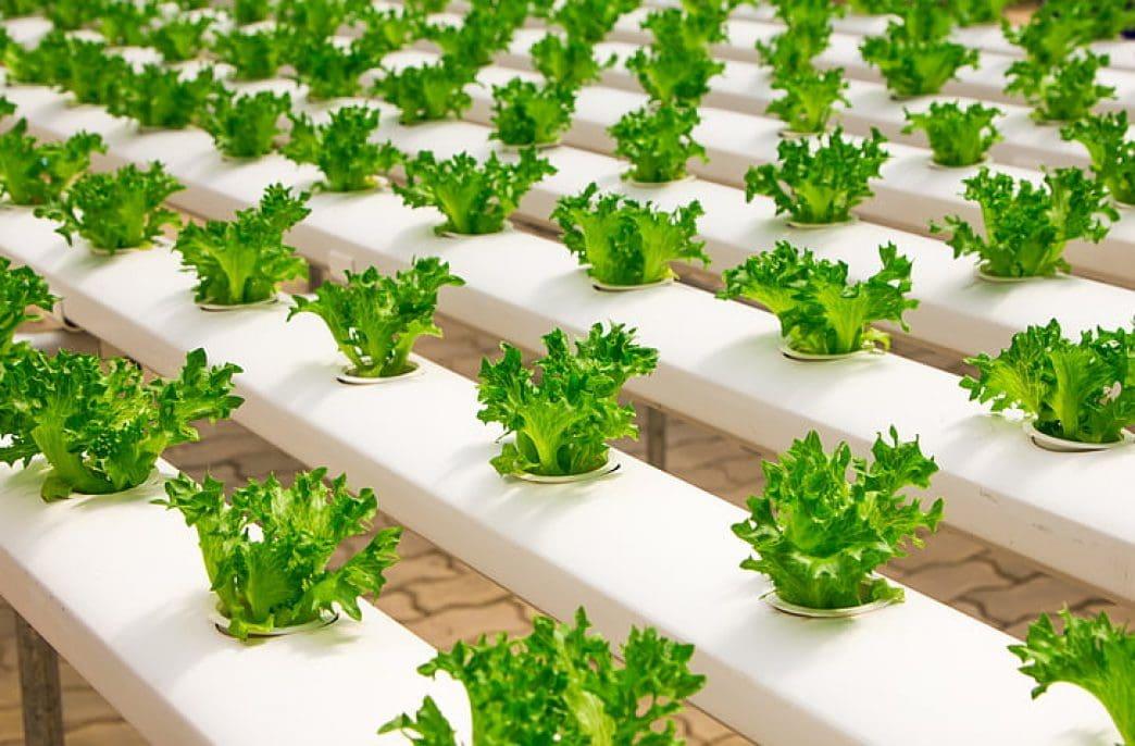 В Великобритании создают новую систему вертикального земледелия