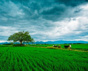 Bayer продолжает инвестиции в агротехнологии