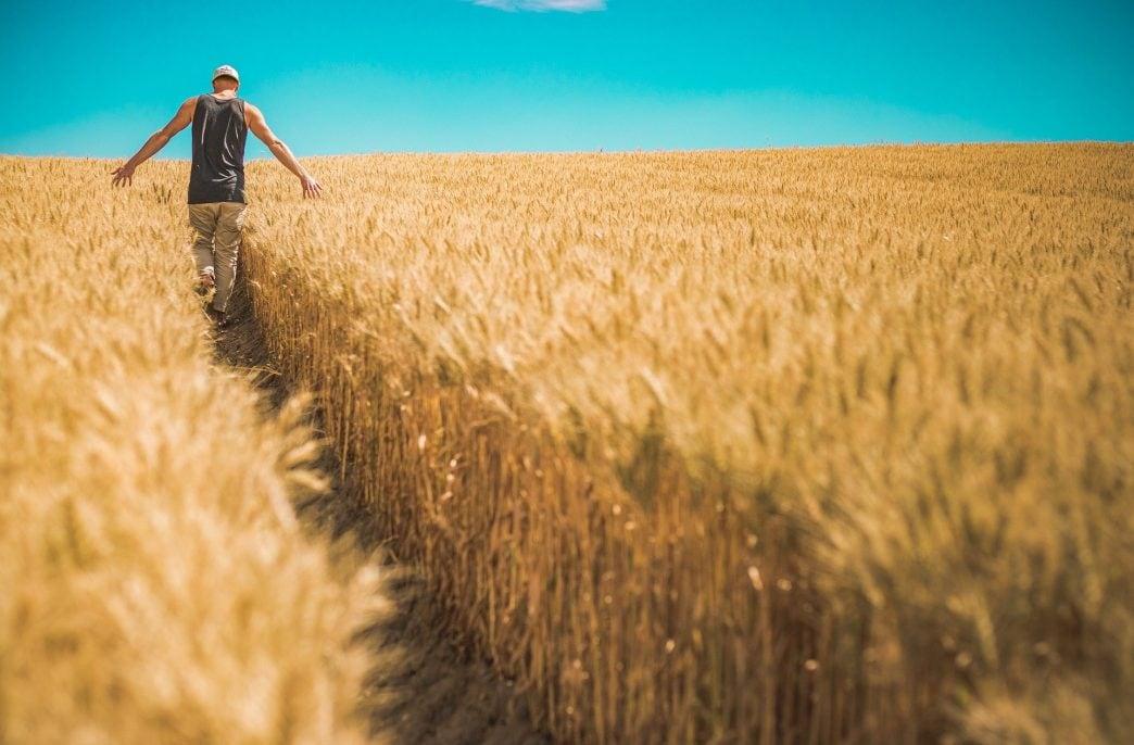 Россия собрала 95 млн. тонн зерна