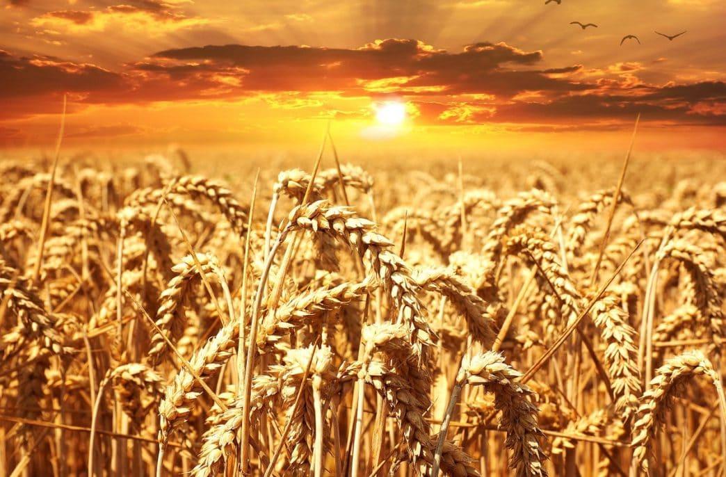 В Москве обсудят перспективы сельскохозяйственного экспорта