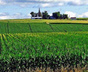 Novozymes и Anuvia Plant Nutrients создадут новые продукты