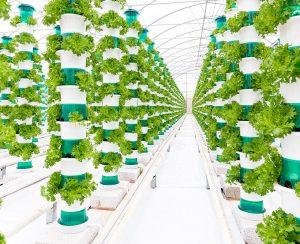 Великобритания получила новую вертикальную ферму