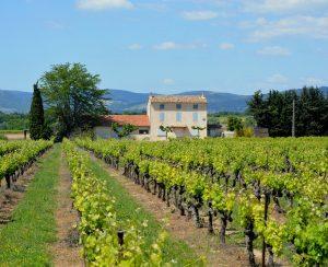 Во Франции изучат опасность пестицидов в виноградниках