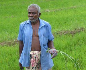 Правительство Шри-Ланки давит на импорт органических удобрений