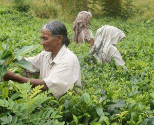 Власти Шри-Ланки не отступают от намеченного курса
